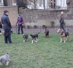Pita of Transylvania becomes Bertie of London and meets his neighbours in the park