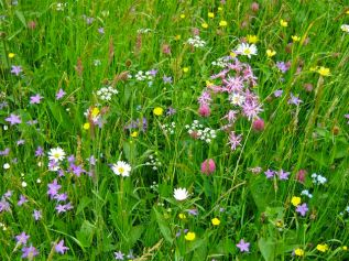 The number of wildflowers in any square metre of meadow is worth counting with a plant encyclopaedia to hand.