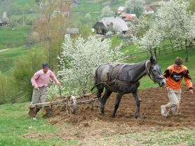 Spring ploughing isn't easy on these slopes