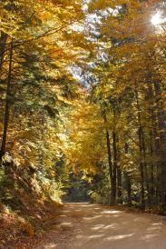 Autumn – the green-gold route to Magura