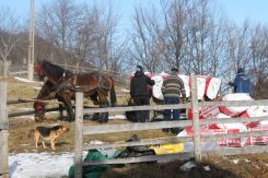 Vata minerala (rockwool) arriving by horse and caruta, with Papi supervising