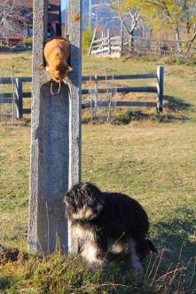 Lost dog, abandoned puppy, winter, Magura, Transylvania