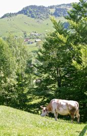Florica really needs two legs longer than the others to graze these steep slopes