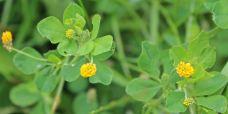 Wildflowers Transylvania Meadows Romania Magura