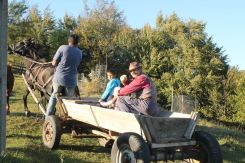 Viorel steers horse Carina up the hill after delivering my life-saving firewood. Chivu and Vladut wave goodbye as they head home