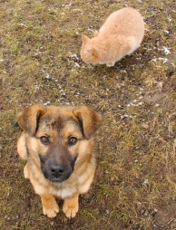 Papi as a puppy, cute as can be at three months old; with his chum Buster