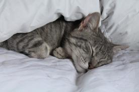 Cat, Mouse, Transylvania