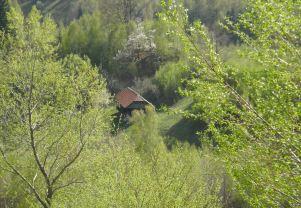 A view through summer leaves