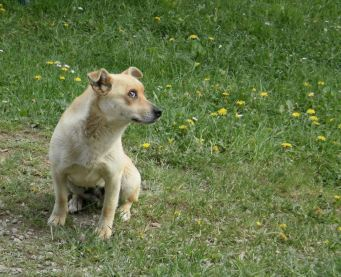 Furnica, Papi's mum – silent and deadly with foxes, sweet and happy as a friend to Hobbs