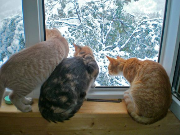 Mountain life, cats, snow, October, Magura, Arabella