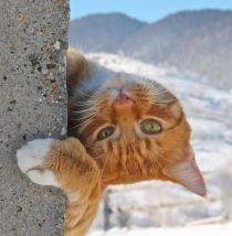 George, ginger cat, snowy mountains, winter, happy cat