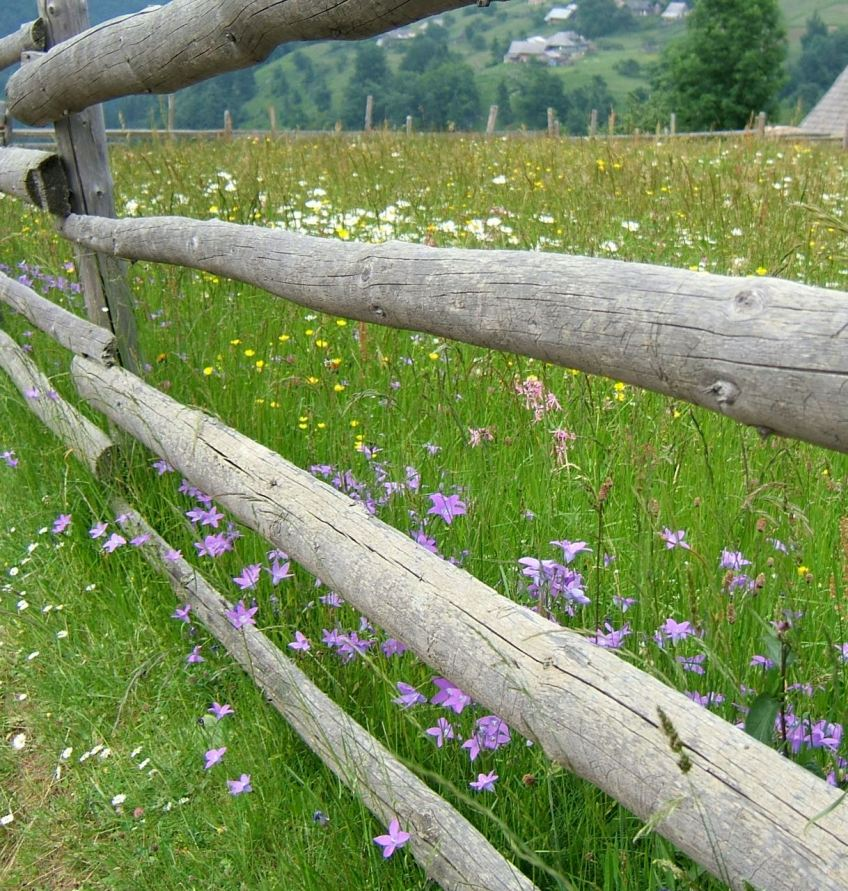 Magura wildflower meadow
